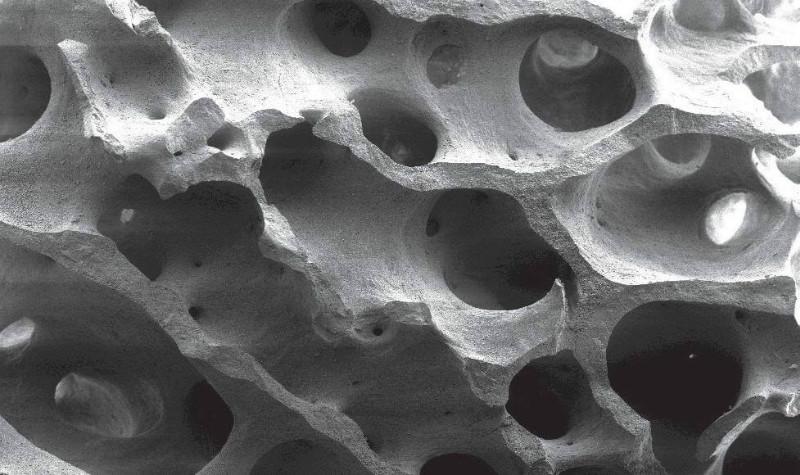 бычья кость стоматология
